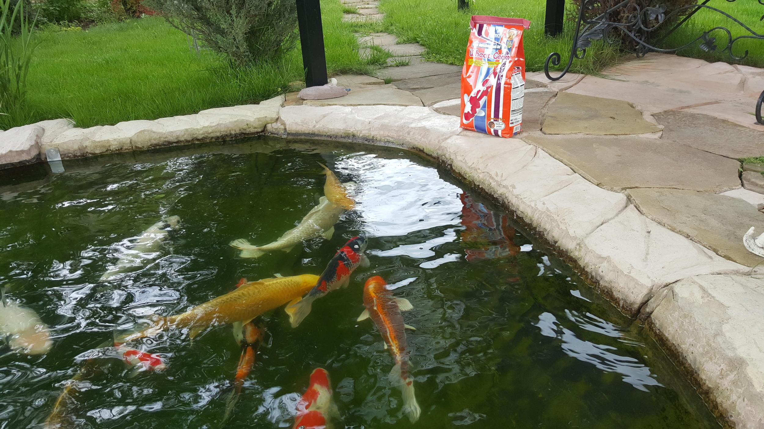 Пруд своими руками на даче для разведения рыбы