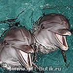 Плавать с дельфинами в Москве