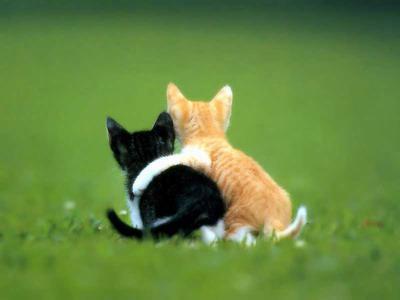 Коты в обнимку