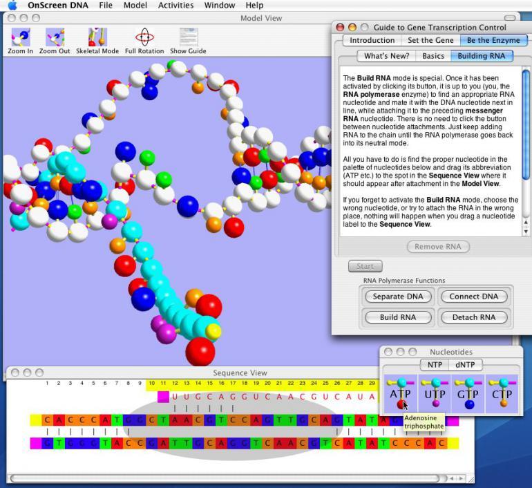 OnScreen DNA 1.2 - двойная спираль ДНК на вашем дисплее