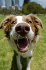 Собаки, натренированные на поиски DVD