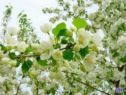 Весна – осторожно, смена настроений