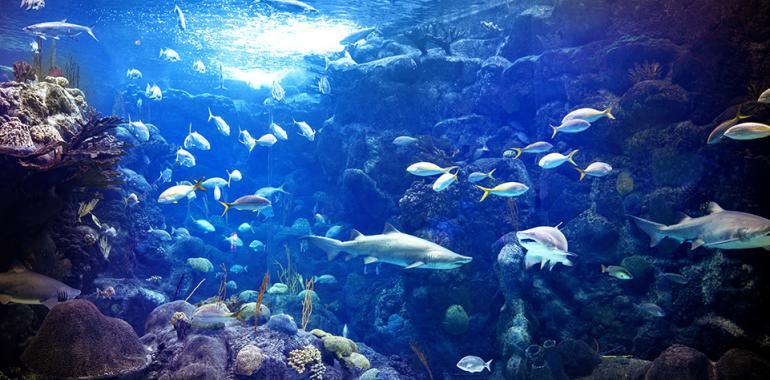 Скалярии в многовидовом аквариуме