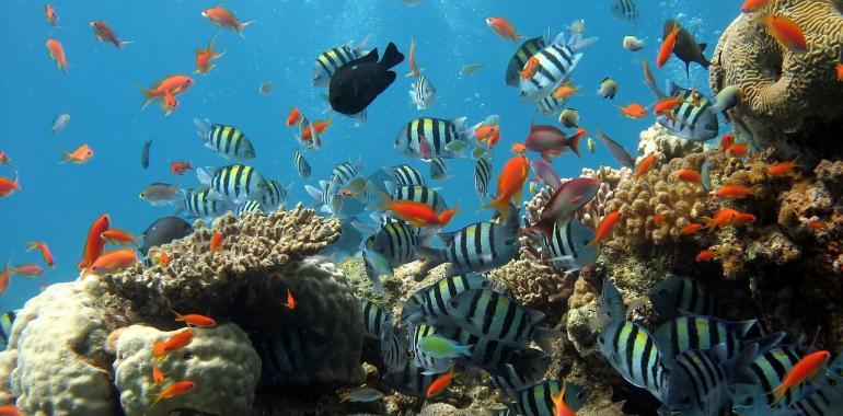 Как оборудовать морской аквариум?