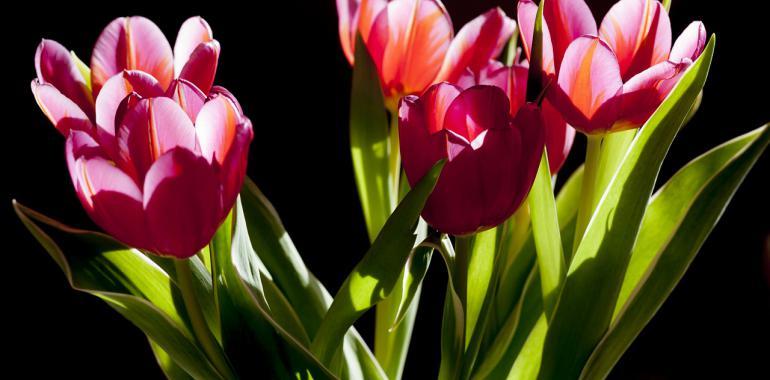 Где заказать доставку цветов в Киеве?
