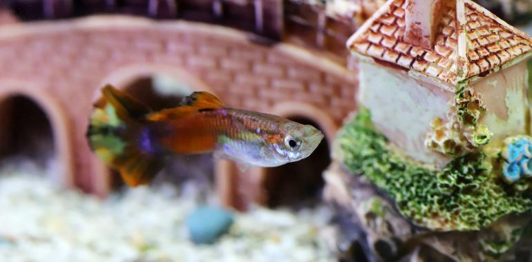 Что такое аквариумные воздушные камни