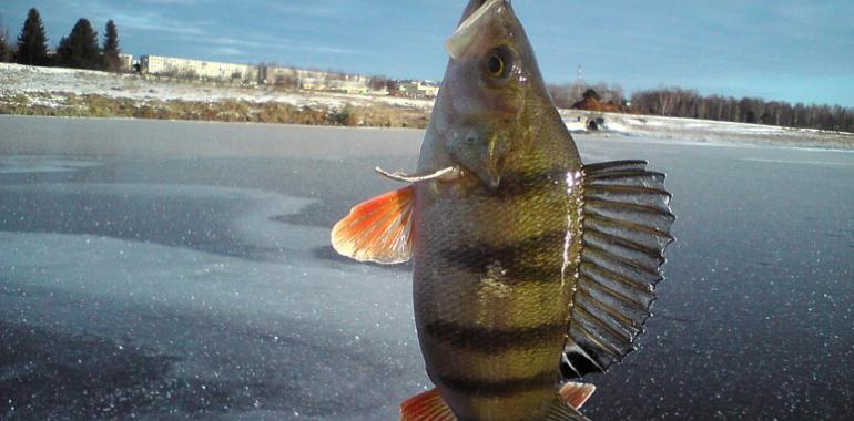 зимой на рыбалке