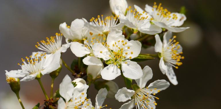 Какие цветы посадить на даче, чтобы цвели все лето