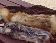 В Евросоюзе введен запрет на шубы из кошек