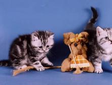 Какие породы кошек гипоаллергенные