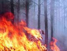 Дальневосточном федеральном округе зарегстрирован 41 лесной пожар