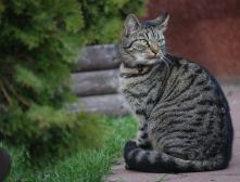 Качественный корм для кошек и собак предлагает зоомагазин MASTERZOO
