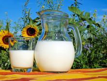 Крынка молока и стакан с молоком на фоне поля подсолнечника