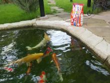 пруд с рыбой